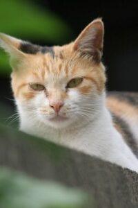 cat0090-066
