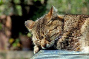 cat-590684_960_720