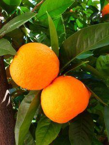 オレンジ_1465667558-225x300