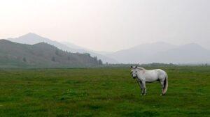mongolia-831276_640
