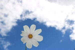 blue-sky-1404535_640