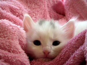 kitten-cat-fluffy-cat-cute-62321