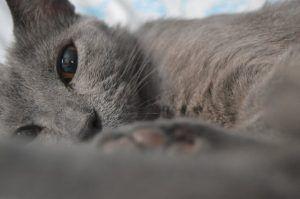 pexels-photo-60622